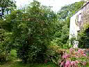 The Laurels Bed & Breakfast, Bed and Breakfast Accommodation, Truro