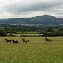 Tyr Ywen Farm, Bed and Breakfast Accommodation, Abergavenny