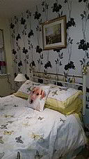 Meadlodge Guesthouse, Guest House Accommodation, Weymouth